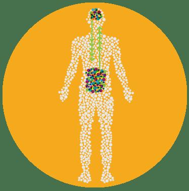 Micronutrient Absorption Profile | Nava Health & Vitality Center